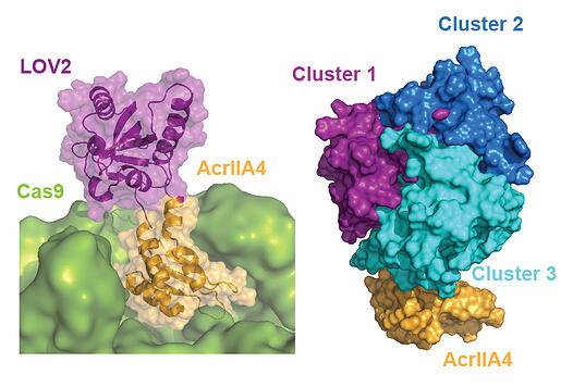 P1_Telomere_labeling